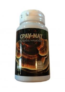 CPAV-NAT CORIOLUS VERSICOLOR 60 CÁPSULAS - NAT DIET - 8436543530063